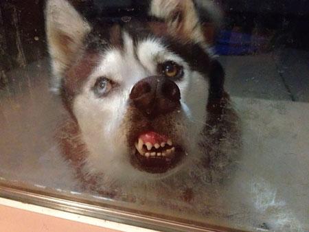 عکس خفن از حیوانات, عکس های بامزه و خنده دار