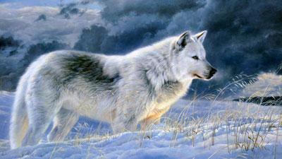 متن های زیبا درباره گرگ, جملات زیبا در مورد گرگ
