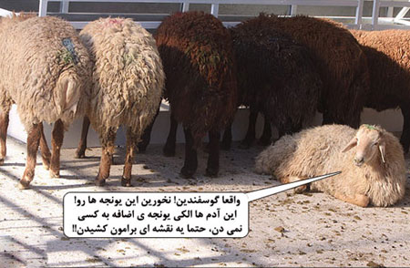 عید قربان گوسفندان