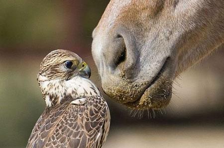 سري چهارم عکس های بامزه و خنده دار از حیوانات