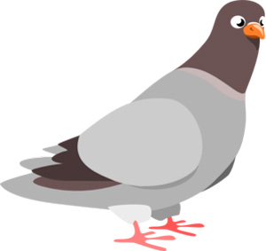تست هوش پرواز کبوتر با پاسخ تست هوش