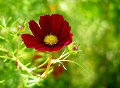 نکات زیبا برای زندگی زیبا , جملات زندگی زیبا