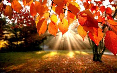 جملات زیبای پاییز, جملات عاشقانه پاییز