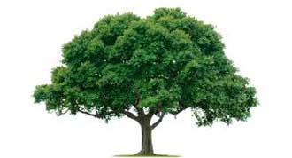 داستان درخت جاودانگی, داستان های خواندنی