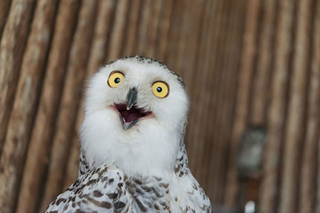 عکس های خنده دار از حیوانات, جدید ترین عکس های خنده دار