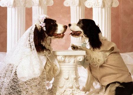 جشن عروسی حیوانات ,ازدواج حیوانات