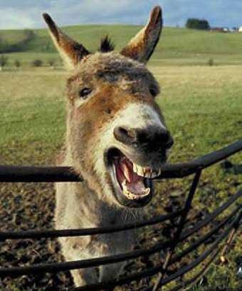 عکس خر خر خر خنده دار