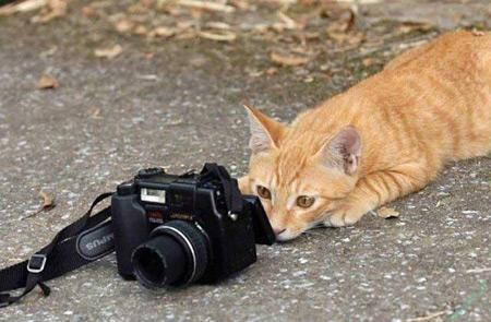 تصاویر جالب,تصاویر جالب و خنده دار,تصاویر جالب و زیبا