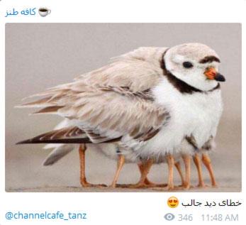 متن طنز تلگرام