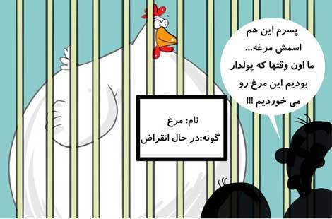 کاریکاتور,کاریکاتو مرغ,قیمت مرغ