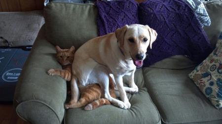 عکس خنده دار حیوانات, عکس های بامزه و خنده دار از حیوانات