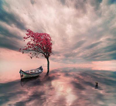 جملات کوتاه موفقیت و زندگی زیبا, تصاویر زندگی زیبا