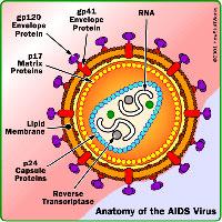 ایدز-شرح بیماری-علت بیماری و ...