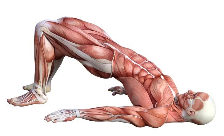 تمرن از بین بردن درد پشت, تمرین  برای درد عضلات