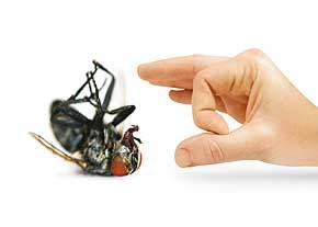 حشرات گزنده مهمانهاي ناخوانده فصل گرما