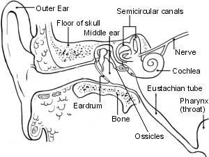 گوش و حلق و بینی, عفونت گوش, پرده گوش