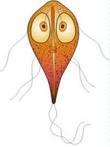 ژیاردیاز, بیماری ژیاردیازیس, بیماریهای عفونی