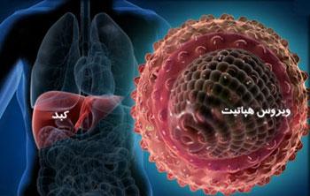 ویروس هپاتیت C, اصول تغذیه در هپاتیت