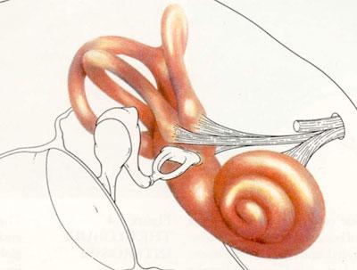 بیماریهای گوش و حلق و بینی, مشکل شنوائی