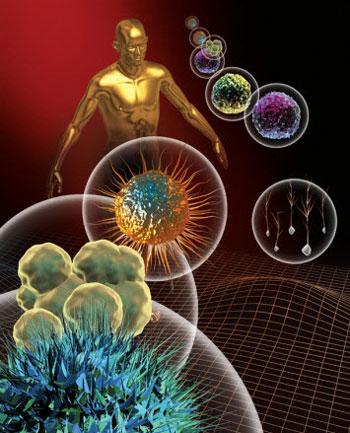 سیستم ایمنی بدن, پسوریازیس