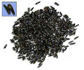 سیاهدانه آنتی بیوتیک گیاهی