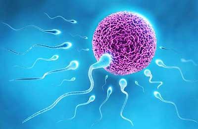داروهای گیاهی و طب سنتی|شناخت گیاهان اسپرم ساز
