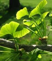 گیاهان ضدسرطان