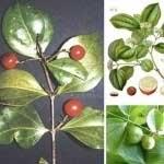 مطالب داغ: سمی ترین گیاهان جهان