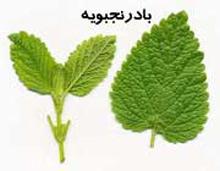 درمان اضطراب,داروی گیاهی درمان اضطراب