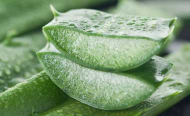 3ماده مفید برای رفع سوهاضمه