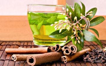 گیاهان دارویی,خواص داروهای گیاهی