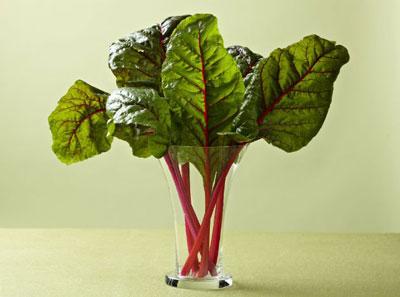 کدوم گیاه ها عضله میسازند؟