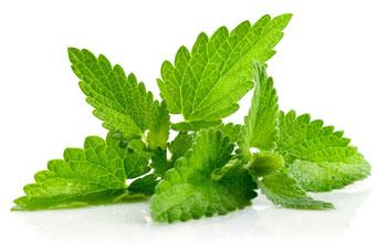 گیاهان دارویی درمان آکنه,درمان آکنه صورت