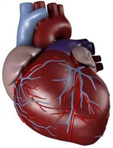 گياه درماني در بيماري هاي قلبي عروقي