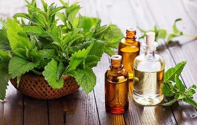 ,گیاهان دارویی برای معده درد