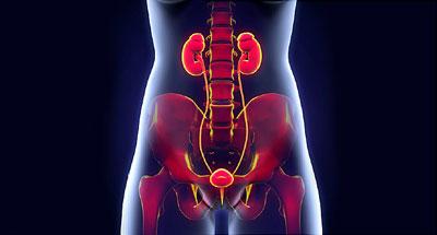 important urinary1 2 - دانستنیهای مهم درباره عفونت دستگاه ادراری