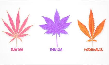 عوارض کشیدن ماریجوانا, همه چیز درباره ماریجوانا, اثرات طولانی مدت ماریجوانا