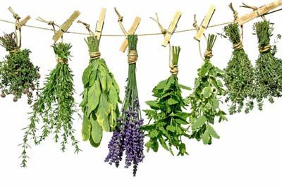 کوچک کردن سینه ها,گیاهان دارویی برای کوچک کردن سینه ها
