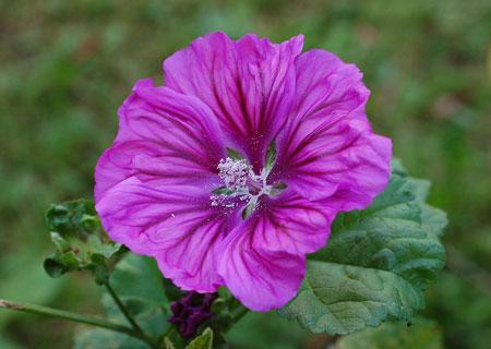 گیاهان دارویی برای درمان عفونت