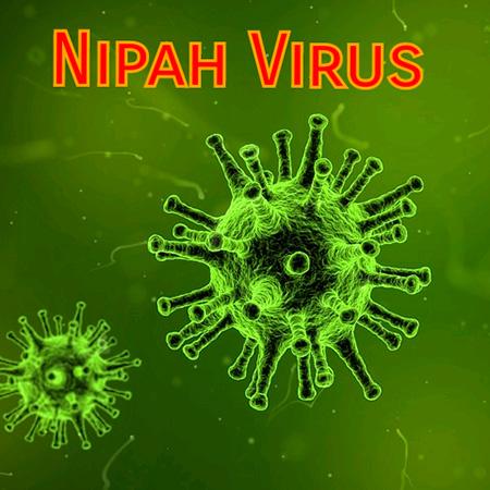 درمان ویروس نیپاه, علایم ویروس نیپاه
