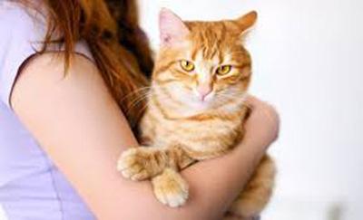 بیماری گربه چیست؟