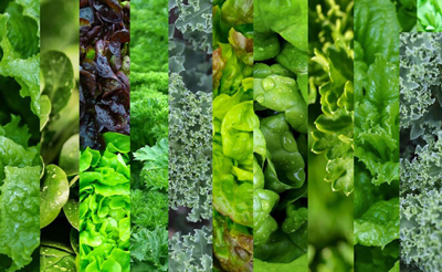 بهترین گزینه هایی غذایی, خواص سبزی خوردن