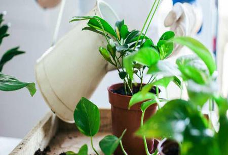 قرص آهن برای گیاهان آپارتمانی,قرص ضد بارداری برای تقویت گل