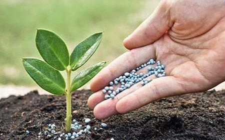 طریقه استفاده از قرص آسپرین برای رشد گیاهان,نگهداری گیاهان هنگام سفر
