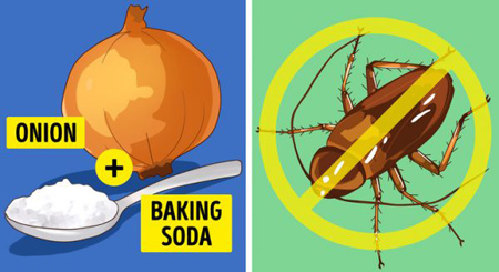 از بین بردن حشرات  در خانه, راههای مبارزه با مورچه ها