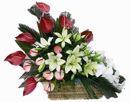 عکس سبد گل,سبد گل,سبد گل تبریک عید تولد