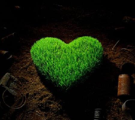 کاشت سبزه ی عید نوروز,مراحل کاشت سبزه به شکل قلب