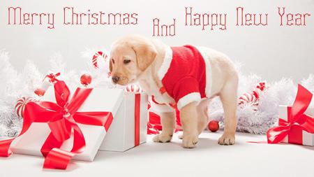 کارت پستال کریسمس 2016, تصاویر کارت پستال کریسمس