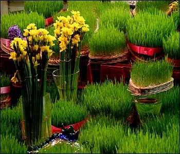 عکس   مدل سبزه عید نوروز