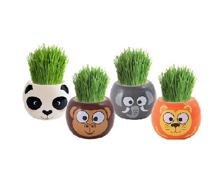 کاشت سبزه میمون, سبزه به شکل میمون